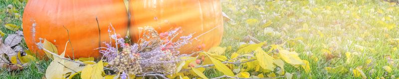 Abóbora alaranjada sobre o fundo outonal brilhante da natureza da beleza Autumn Thanksgiving Day Imagem de Stock