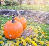 Abóbora alaranjada sobre o fundo outonal brilhante da natureza da beleza Autumn Thanksgiving Day Imagem de Stock Royalty Free