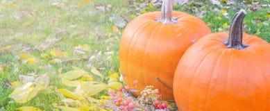 Abóbora alaranjada sobre o fundo outonal brilhante da natureza da beleza Autumn Thanksgiving Day Fotos de Stock Royalty Free