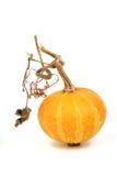 Abóbora amarela fotografia de stock royalty free