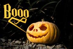 Abóbora assustador de Boo Halloween no galho escuro da grama fotos de stock royalty free