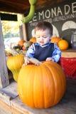 Abóbora bonito da colheita do menino Fotografia de Stock