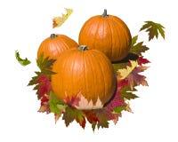 Abóbora com folhas de outono Imagem de Stock Royalty Free