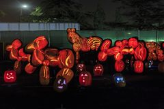 Abóbora com luz na noite Fotografia de Stock Royalty Free