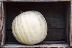 Abóbora Curvy da exploração agrícola do amarelo alaranjado da forma em umas caixas de madeira na prateleira do mercado Imagens de Stock