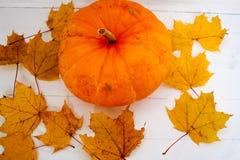 Abóbora da pintura do amarelo do outono das folhas de bordo Imagem de Stock