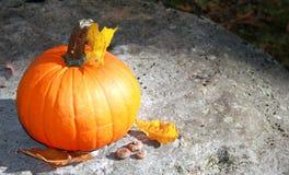 Abóbora de Alloween na laranja da decoração da licença da queda da rocha Foto de Stock