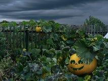 Abóbora de Dia das Bruxas perto da cerca Foto de Stock Royalty Free