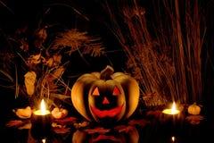 Abóbora de Halloween e planta seca imagens de stock royalty free