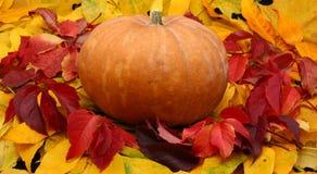 Abóbora de Halloween nas folhas coloridas Fotografia de Stock Royalty Free