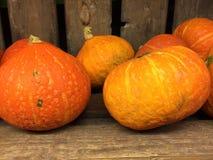 Abóbora de Oktober Fotos de Stock Royalty Free