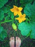 Abóbora e flores novas Fotografia de Stock