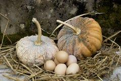 Abóbora e ovos Foto de Stock Royalty Free