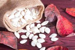 Abóbora e sementes de abóbora Fotos de Stock Royalty Free
