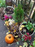 Abóbora entre flores fotos de stock