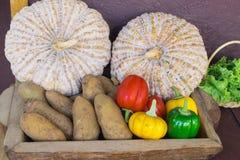 Abóbora fresca, batatas, paprika Fotos de Stock Royalty Free