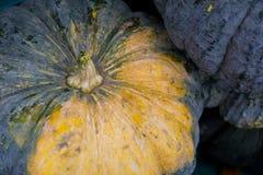 Abóbora fresca com close-up Imagem de Stock