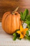Abóbora fresca com folhas Foto de Stock Royalty Free
