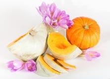 Abóbora madura cinzenta com polpa alaranjada e as flores violetas Foto de Stock Royalty Free