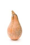 A abóbora madura levanta-se Fotografia de Stock Royalty Free