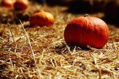 Abóbora na exploração agrícola Fotografia de Stock