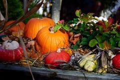 Abóbora para Halloween Fotografia de Stock