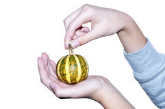Abóbora pequena fresca nas mãos das crianças Foto de Stock Royalty Free