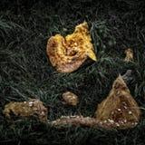Abóbora Rotting Imagem de Stock
