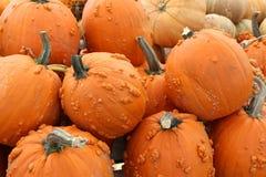 Abóboras alaranjadas coloridas do knucklehead Imagem de Stock