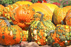 Abóboras alaranjadas decorativas Fim acima Fotografia de Stock Royalty Free