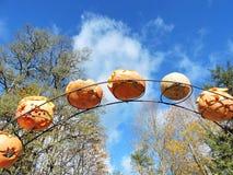 Abóboras alaranjadas do Dia das Bruxas Fotos de Stock
