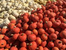Abóboras alaranjadas e brancas Fotografia de Stock Royalty Free