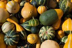 Abóboras amarelas, verdes e listradas da bala da abóbora - imagem de stock