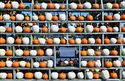 Abóboras arranjadas em um teste padrão da parede Fotos de Stock