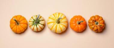 Abóboras, Autumn Thanksgiving e fundo coloridos diferentes de Dia das Bruxas fotografia de stock royalty free