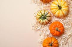 Abóboras, Autumn Thanksgiving e fundo coloridos diferentes de Dia das Bruxas imagens de stock