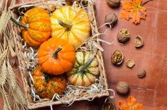 Abóboras, Autumn Thanksgiving e fundo coloridos diferentes de Dia das Bruxas imagens de stock royalty free