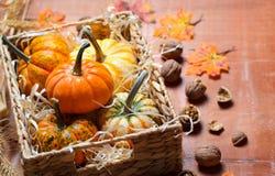 Abóboras, Autumn Thanksgiving e fundo coloridos diferentes de Dia das Bruxas foto de stock