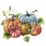 Abóboras brilhantes pintados à mão da colheita do outono da aquarela com as folhas e as flores isoladas no fundo branco botanical ilustração royalty free