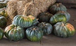 Abóboras colhidas em um remendo da abóbora, Gainesville, GA, EUA foto de stock