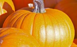 Abóboras coloridas fotos de stock