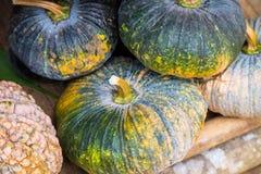 Abóboras coloridas e abóboras verdes Fotos de Stock