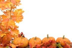 Abóboras com folhas da queda Fotografia de Stock