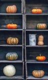 Abóboras Curvy da exploração agrícola do amarelo alaranjado da forma em umas caixas de madeira na prateleira do mercado Fotografia de Stock Royalty Free