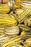 Abóboras da abóbora do cucurbita da batata doce de Delicata do outono Imagens de Stock