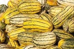Abóboras da abóbora do cucurbita da batata doce de Delicata do outono har Imagem de Stock