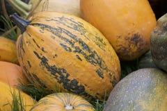 Abóboras da colheita empilhadas em uma grande pilha Imagens de Stock Royalty Free