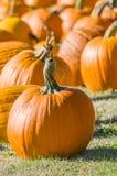 Abóboras de Dia das Bruxas em um campo rural Imagem de Stock Royalty Free
