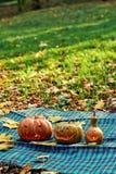 Abóboras de Dia das Bruxas exteriores no parque do outono Fotos de Stock Royalty Free