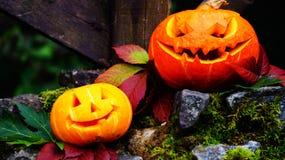 Abóboras de Dia das Bruxas na pedra com musgo em uma floresta assustador Fotos de Stock Royalty Free